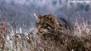 wildcatpic3