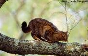 wildcatpic4