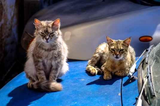 street dirty car cats
